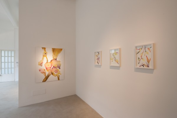 Isabella Nazzarri | Vita delle Forme, Instalaltion view