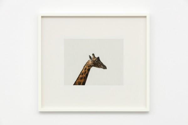 <span class=%22title%22>Giraffe<span class=%22title_comma%22>, </span></span><span class=%22year%22>2020</span>