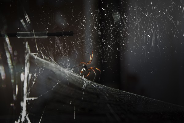 Tomás Saraceno: How To Entangle The Universe In A Spider Web