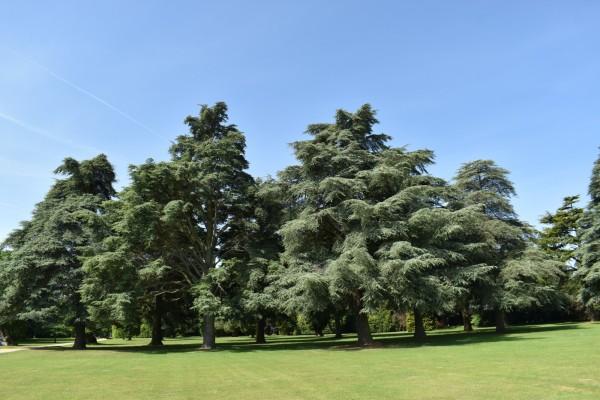 Tino Sehgal at Blenheim Park & Gardens