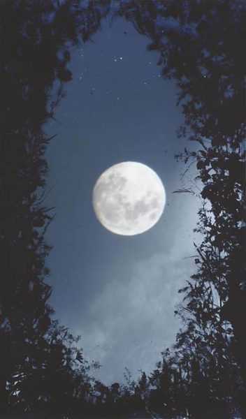 Full Moon Briars 2005 dye destruction (Ilfochrome) print, series of 5 each unique 178.5cm x 107.5cm framed