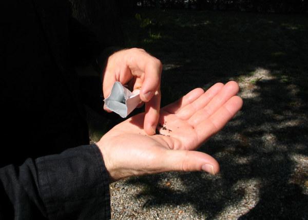 Fair Proposal no. 71: Wildflower Seeds Thursday 14 June 2007