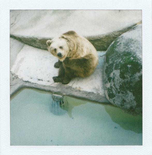 Zoo Polaroids (Barcelona) - Bear I 2008 polaroid photograph 7.9 x 7.6 cm (image size) / 31 x 23.5 cm framed