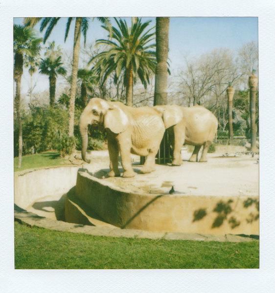 Zoo Polaroid (Barcelona) - Elephants 2008 polaroid photograph 7.9 x 7.6 cm (image size) / 31 x 23.5 cm framed