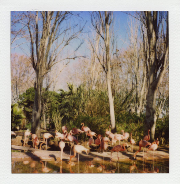 Zoo Polaroid (Barcelona) - Flamingo 2008 Polaroid photograph 7.9 x 7.6 cm (image size) / 31 x 23.5 cm framed