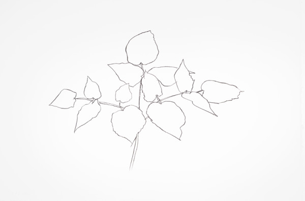 Woodland Plant 1979 Transfer lithograph on 300-gram Arches Cover Paper | Edition of 100 80.3 x 120.7 cm
