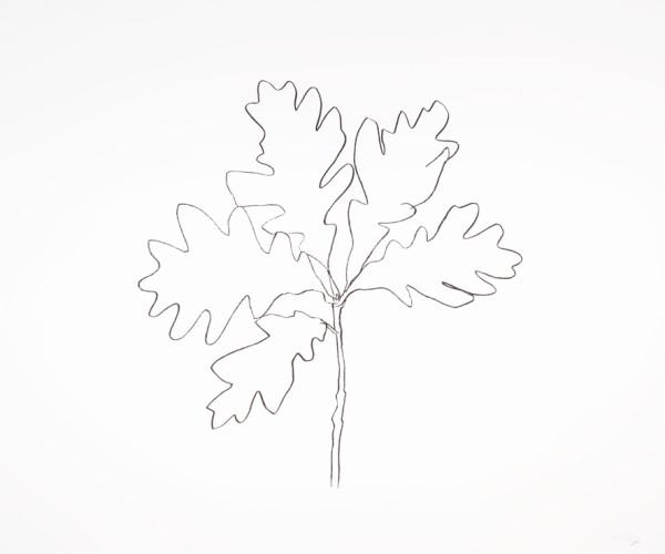Oak III 1992 Lithograph on Rives BFK white paper 76.2 x 91.4 cm