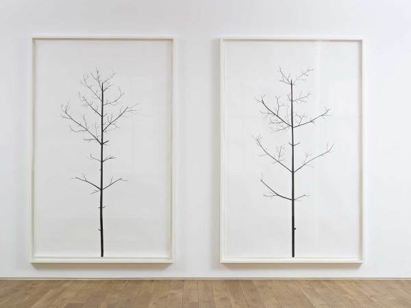 Proposal No. 106: A pair of Winter Drawings 2010 black masking tape on paper 247.5 x 161 cm each (framed)