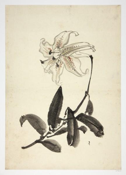 Malerei #007627 Anonymer Künstler, Lilie (yuri), 19. Jahrhundert Tusche und leichte Farben auf Papier. Blatt: 37,5 x 26,5 cm (gerahmt H: 60 x 50 cm)