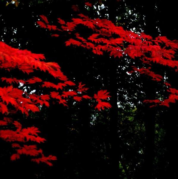 Peter-Cornell Richter #022167 Rot, 1/3, 2012/2020 Fotografie, Pigmentfarbe auf Papier 29,5 x 29,5 cm (Passepartout 50 x 50 cm) 1250 €