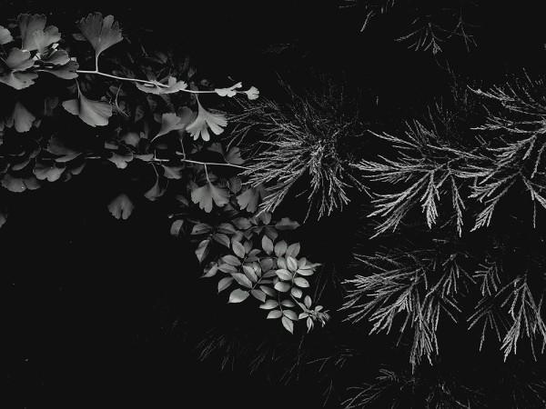 Peter-Cornell Richter #022159 Drei im Abendlicht, 1/3, 2017 Fotografie, Pigmentfarbe auf Papier 26,6 x 35,6 cm 1250 €