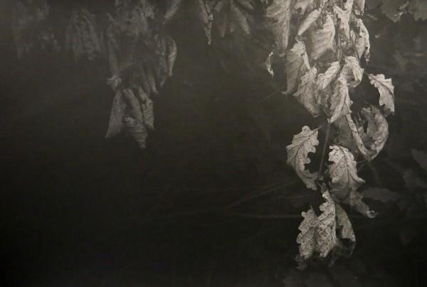 Peter-Cornell Richter #022156 Vergessene Blätter, 1/3, 2014 Fotografie, Pigmentfarbe auf Papier 23,5 x 35 cm 1250 €