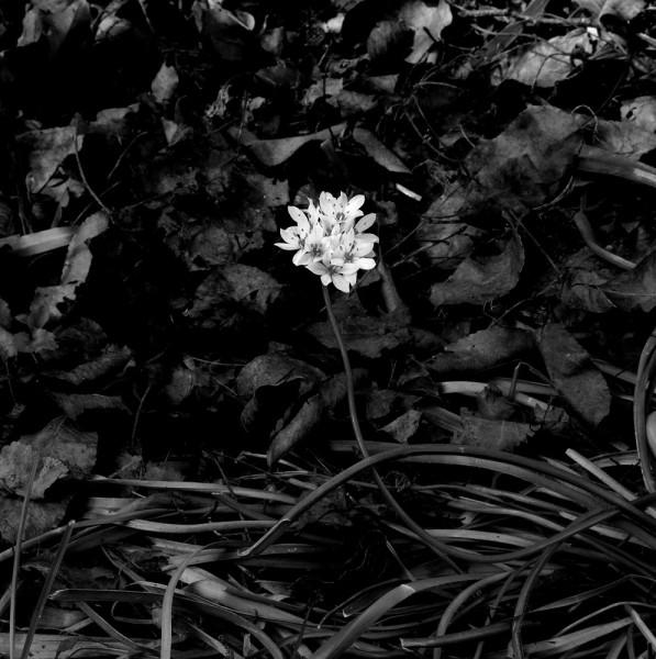 """Peter-Cornell Richter #022169 """"Unknown Flower"""", 1/3, 2020 Fotografie, Pigmentfarbe auf Papier 29,5 x 29,5 cm 1250 €"""