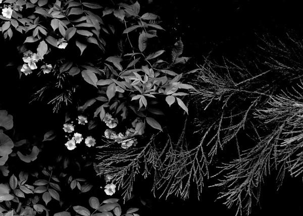 Peter-Cornell Richter #022161 Drei im Abendlicht, 1/3, 2019 Fotografie, Pigmentfarbe auf Papier 25,4 x 35,5 cm 1250 €