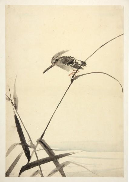 Malerei, #008121 anonymous artist, Kingfisher sitting on a reed, Edo period (1600-1868)