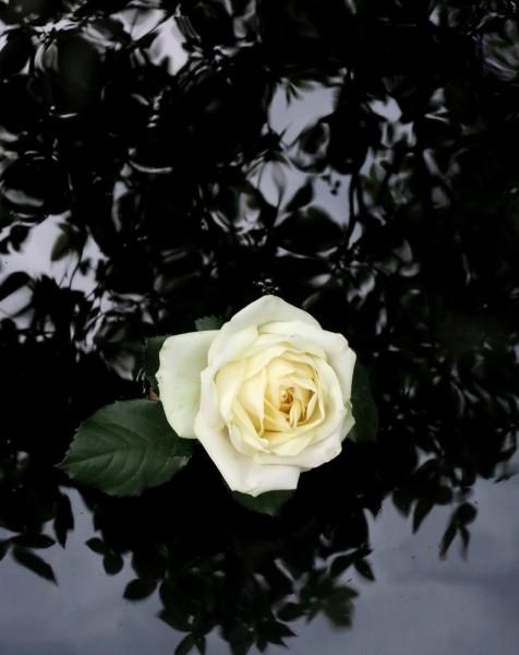 Peter-Cornell Richter #022171 Bergamo Rose, epr. (épreuve), 2020 Fotografie, Pigmentfarbe auf Papier 34,5 x 27,4 cm 1250 €