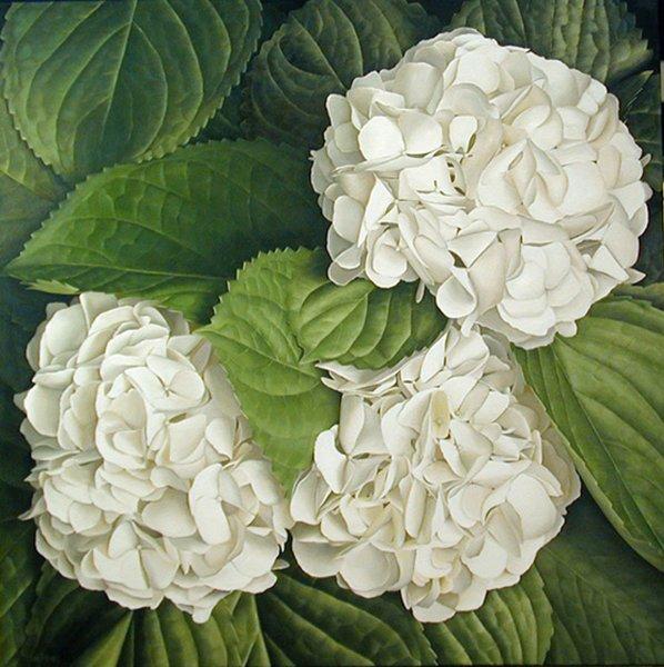 Mia Tarney, White Hydrangea, 2003