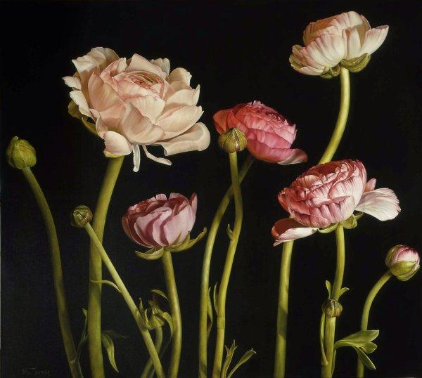 Mia Tarney, Ranunculus, 2006