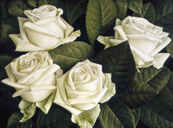 Mia Tarney, White Rose, 2005