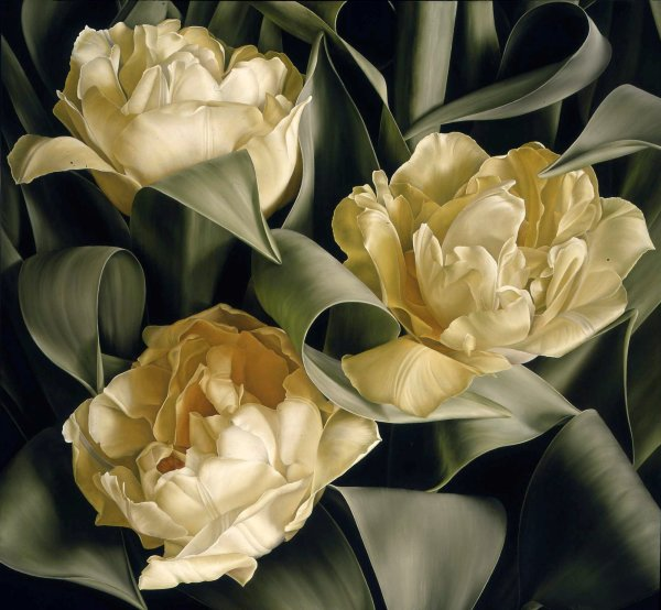 Mia Tarney, Tulipa Verona, 2005