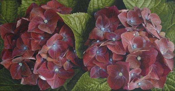 Mia Tarney, Hydrangea (Purple), 2009
