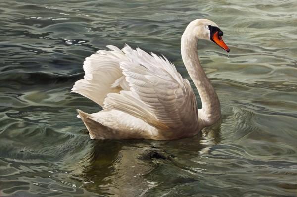 Marco Ramasso, Mute Swan, 2015