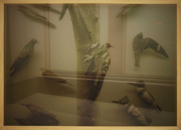 Corrado Sassi, Birds, 2011