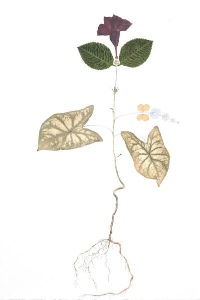 """Marilla Palmer, """"Mandeville Oak""""  2016  Watercolor, fabric, pressed foliage on Arches paper  22 x 15 in"""