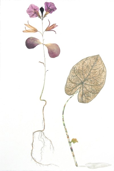"""Marilla Palmer, """"Velvet Leaning""""  2016  Watercolor, fabric, pressed foliage on Arches paper  22 x 15 in."""