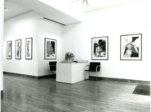 ROBERT KUSHNER Installation View