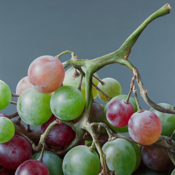 Antonio Castello  Grapes IV  Oil on linen  120 x 120 cm