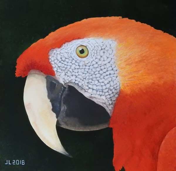 John Lambie Scarlett Macaw watercolour £1000