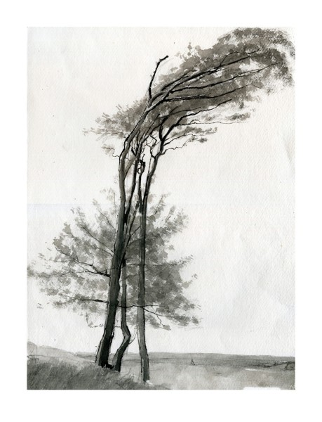 Greg Becker Chanctonbury Tall Trees water-soluble graphite, ink & watercolour £525
