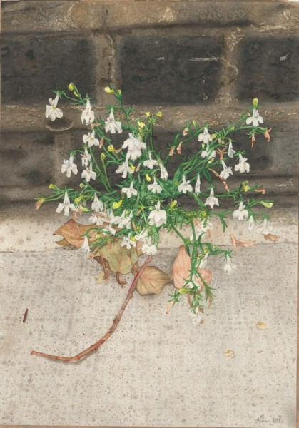 Aidan Potts White Lobelia Black Wall watercolour £1200 Judge's Choice Selected by Jill Leman PRWS RWS Artist & President