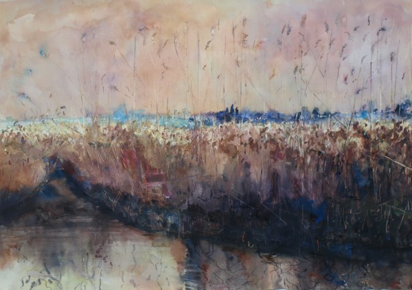 Sophie Knight, Warm Sunny Evening, Reeds, Cley