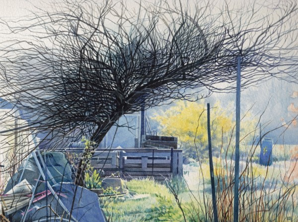 Liz Butler, Spring Sunshine with Forsythia