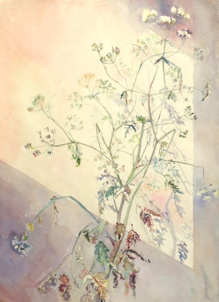 Sophie Knight, Study of Cow Parsley in the Studio with Shaft of Light
