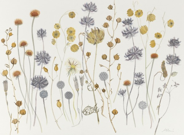 Angie Lewin, Tuscan and Umbrian Seedheads, La Cavière