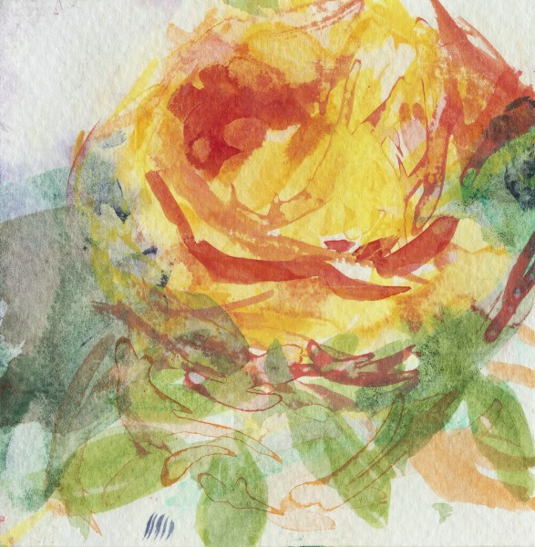 Julie Held Rose watercolour on paper Artwork: 11 x 11cm