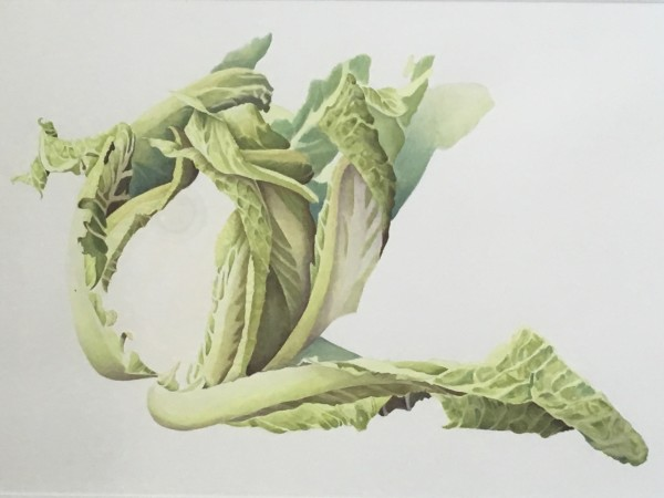 Fay Ballard Cauliflower Leaves watercolour