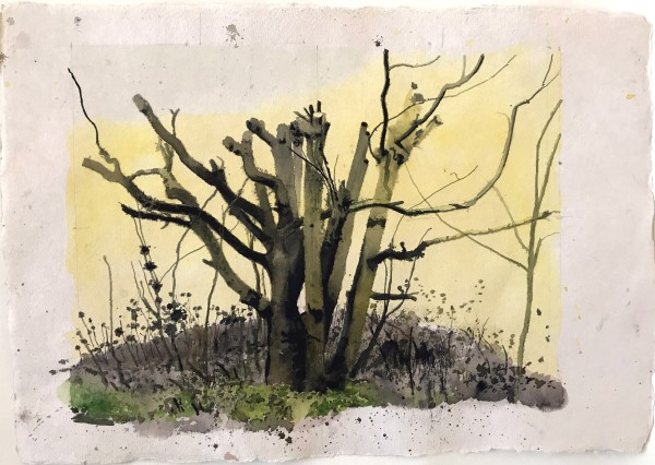 Iain Nicholls Elsecar Cropped Trees Study 2 watercolour on paper - mounted on board Artwork: 43 x 60 cm