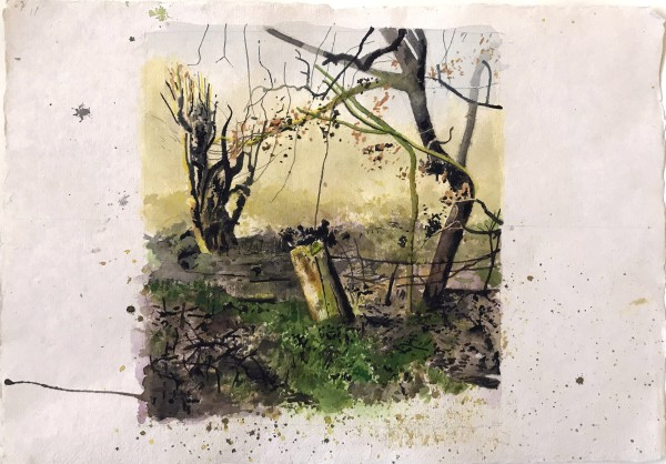 Iain Nicholls Elsecar Cropped Trees Study 1 watercolour on paper - mounted on board Artwork: 43 x 60 cm