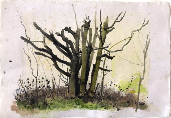 Iain Nicholls Elsecar Cropped Trees Study 3 watercolour on paper - mounted on board Artwork: 43 x 60 cm
