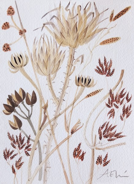 Angie Lewin Catalan Seedheads watercolour Frame: 32 x 25 cm Artwork: 20 x 14.5 cm