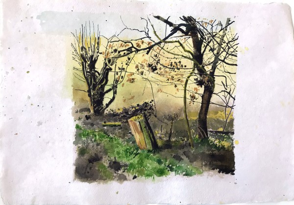 Iain Nicholls Elsecar Cropped Trees Study 4 watercolour on paper - mounted on board Artwork: 43 x 60 cm