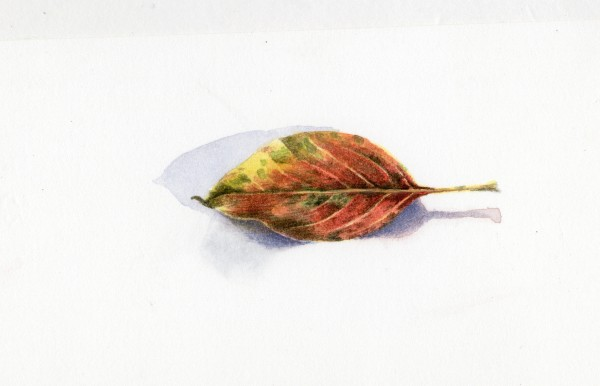 Liz Butler Autumn Leaf II watercolour