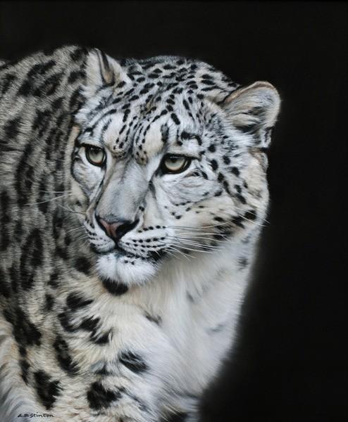 Gary Stinton, Snow Leopard