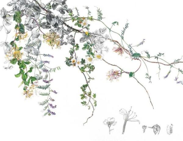 Rosie Sanders, Summer hedgerow flowers in a Dartmoor lane
