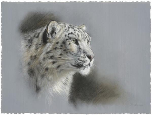Gary Stinton, Snow Leopard Study