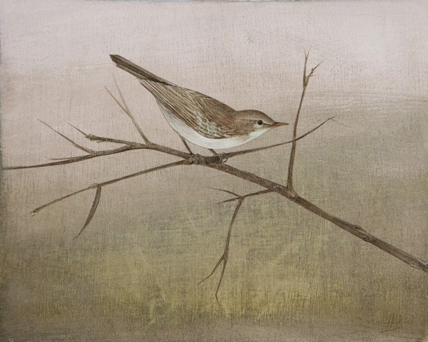 Harriet Bane, Willow Warbler
